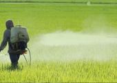 Mortalidade por suicídio é maior para trabalhadores da agropecuária, aponta estudo do ISC/UFBA